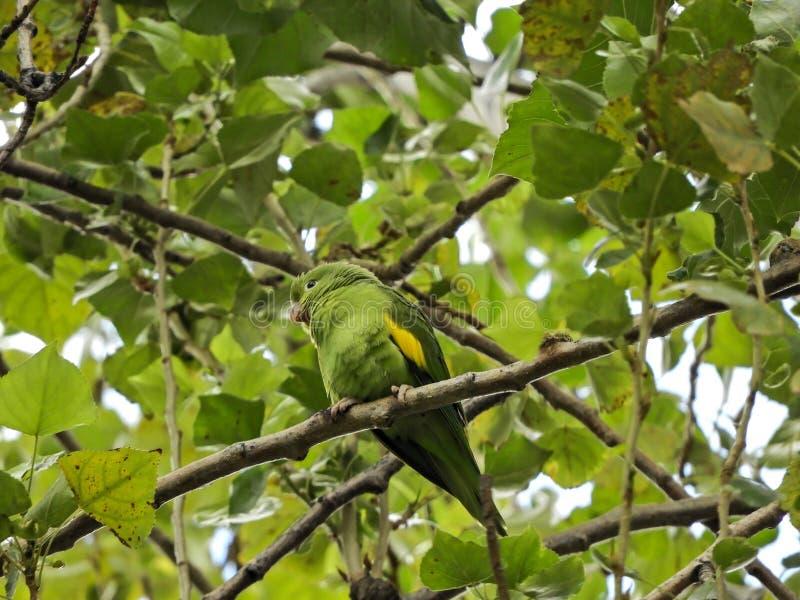 Bird, Fauna, Beak, Branch stock photo