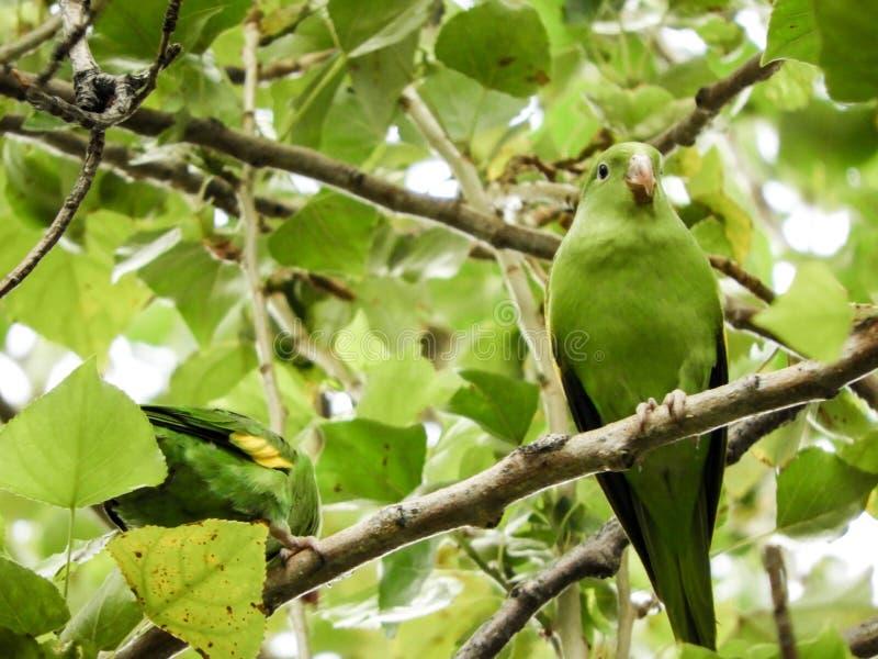 Bird, Fauna, Beak, Branch stock images