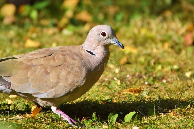 Bird, Fauna, Beak, Ecosystem Free Public Domain Cc0 Image