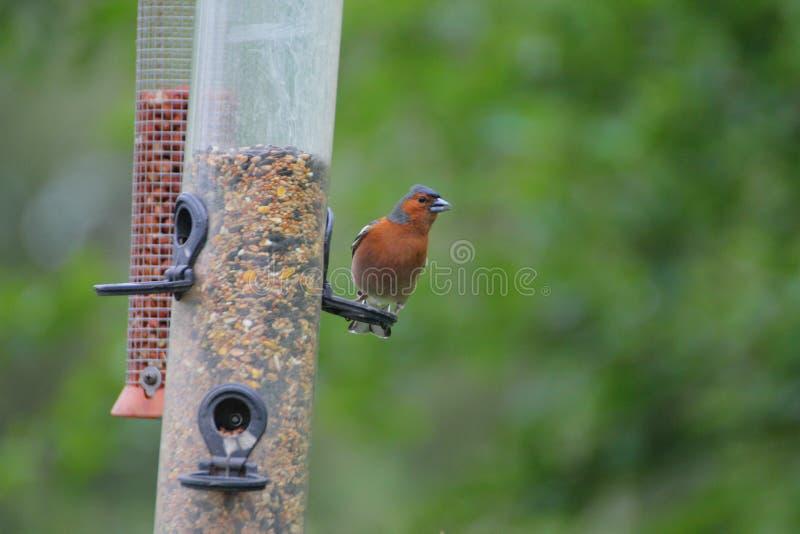 Bird, Fauna, Beak, Bird Feeder stock photos