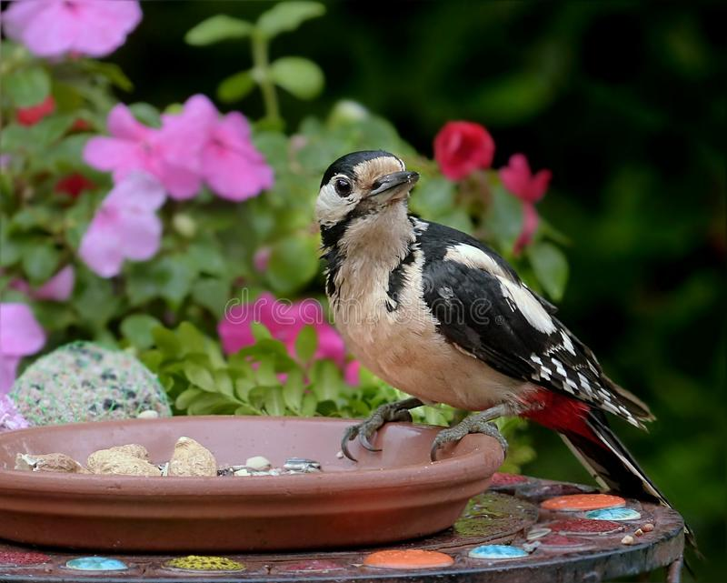 Bird, Fauna, Beak, Plant Free Public Domain Cc0 Image