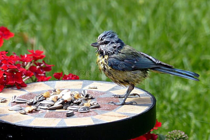 Bird, Fauna, Beak, Plant stock image