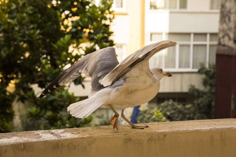 Bird, Fauna, Beak, Seabird stock photos