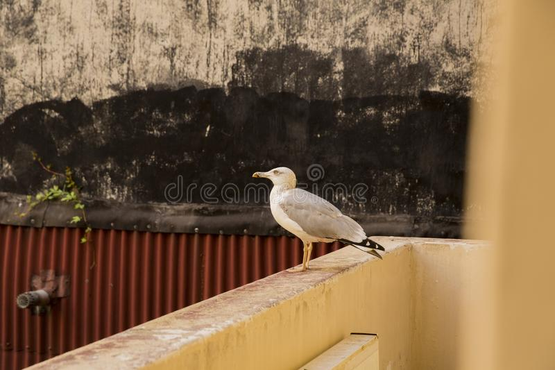 Bird, Fauna, Beak, Seabird stock photography