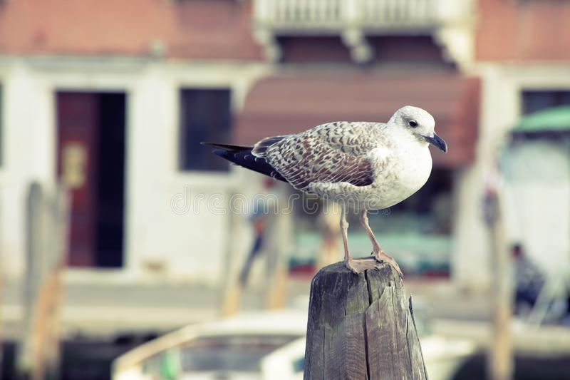 Bird, Fauna, Beak, Seabird stock images
