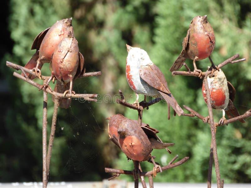 Bird, Fauna, Beak, Sparrow Free Public Domain Cc0 Image