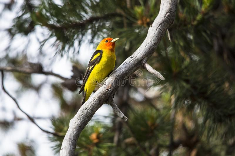 Bird, Fauna, Beak, Tree stock image