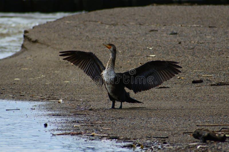 Bird, Fauna, Beak, Water Bird royalty free stock image