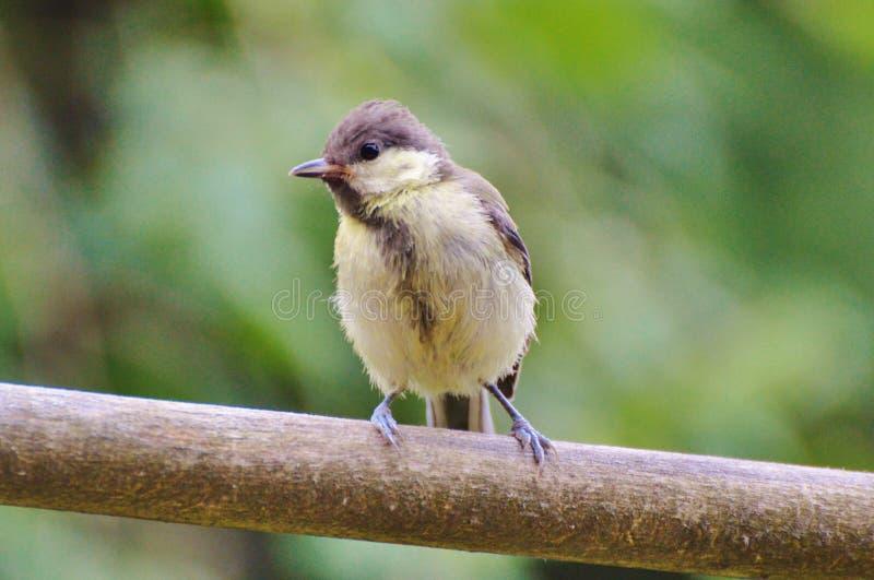 Bird, Fauna, Beak, Wildlife Free Public Domain Cc0 Image