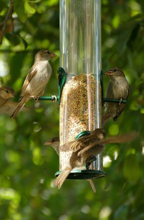 Bird, Fauna, Ecosystem, Bird Feeder stock images