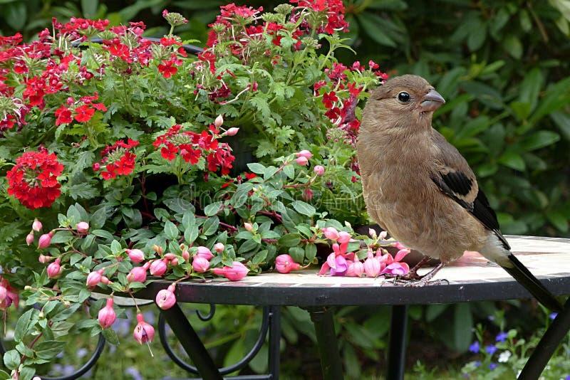 Bird, Fauna, Flora, Plant royalty free stock image