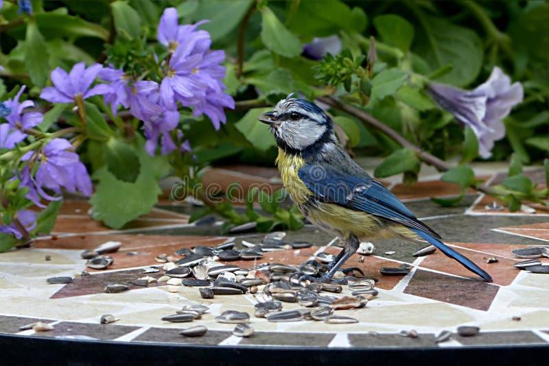 Bird, Fauna, Flora, Plant stock image