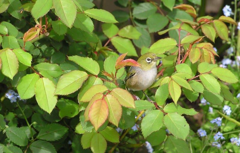 Bird, Fauna, Leaf, Beak Free Public Domain Cc0 Image