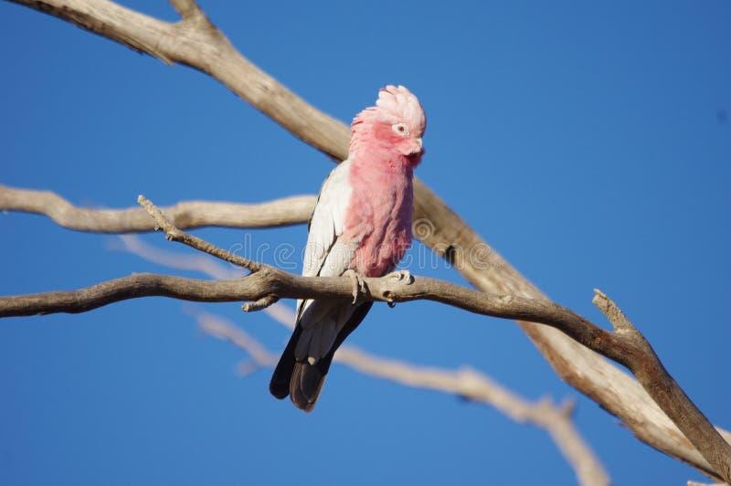 Bird, Fauna, Parrot, Beak stock photo