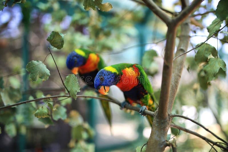 Bird, Fauna, Parrot, Beak stock photography