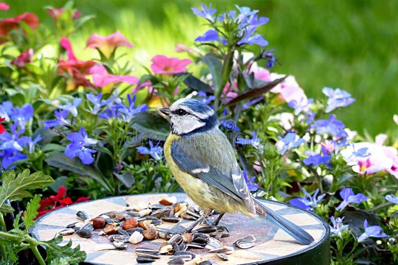 Bird, Fauna, Plant, Bluebird stock image