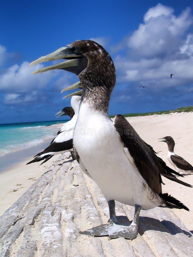 Bird, Fauna, Seabird, Beak Free Public Domain Cc0 Image