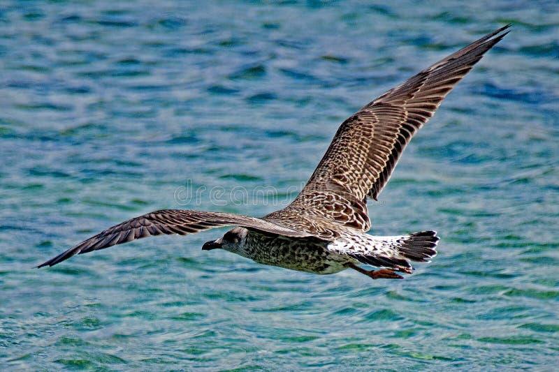 Bird, Fauna, Seabird, Wildlife Free Public Domain Cc0 Image