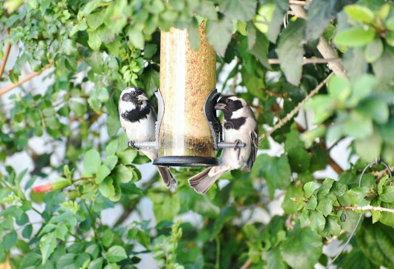 Bird, Fauna, Tree, Plant royalty free stock photography