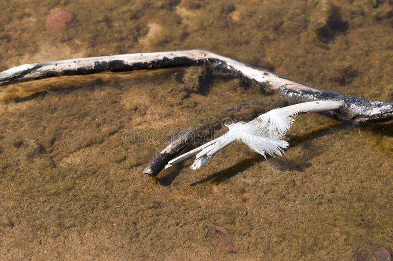 Bird feather. royalty free stock photos