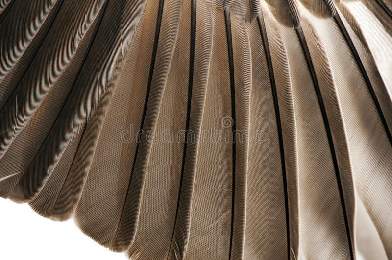 Download Bird Feathers Closeup stock photo. Image of background - 19503476
