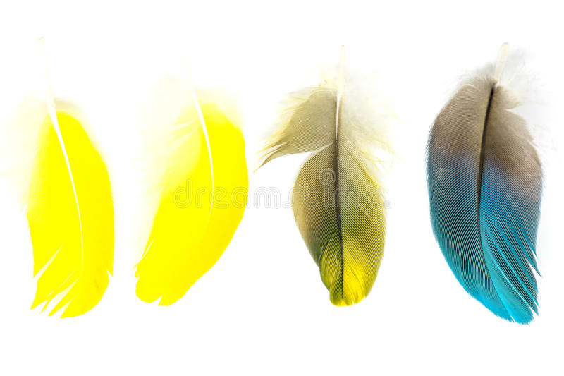 Bird feathers isolated. Colorful bird feathers isolated on white background royalty free stock images