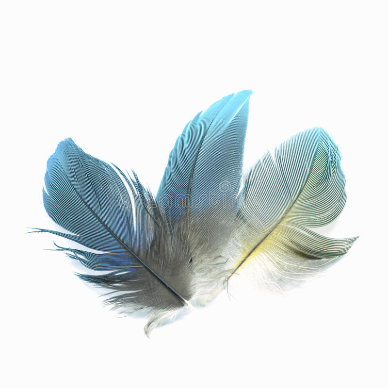 Bird feathers isolated. Colorful bird feathers, isolated on white background stock images