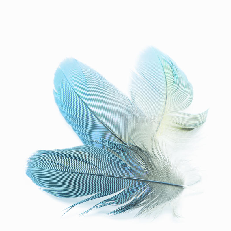 Bird feathers isolated. Colorful bird feathers, isolated on white background royalty free stock images