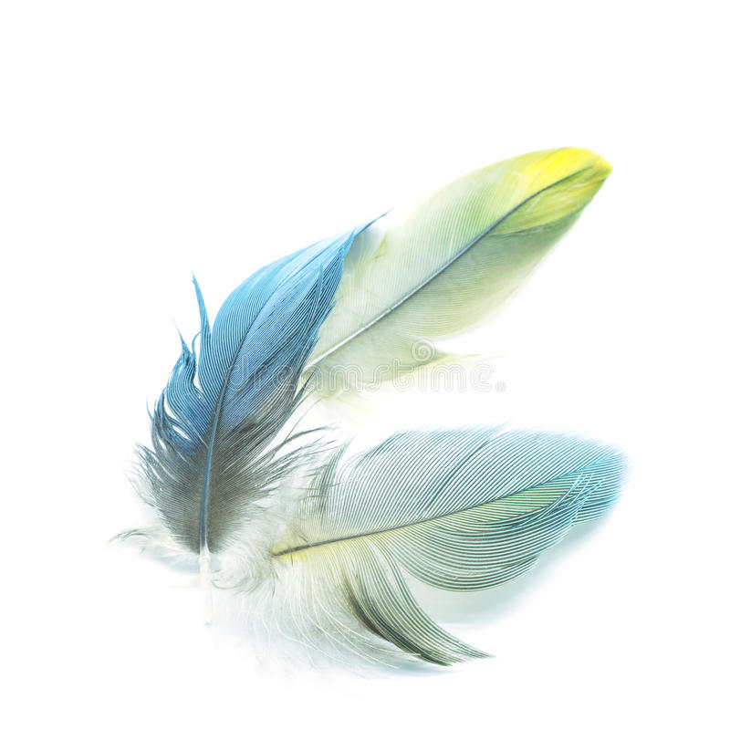 Bird feathers isolated. Colorful bird feathers, isolated on white background royalty free stock photo