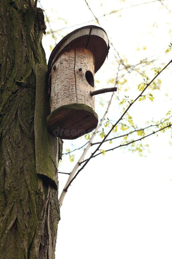 Download Bird feeder stock image. Image of color, wild, tree, false - 18367001