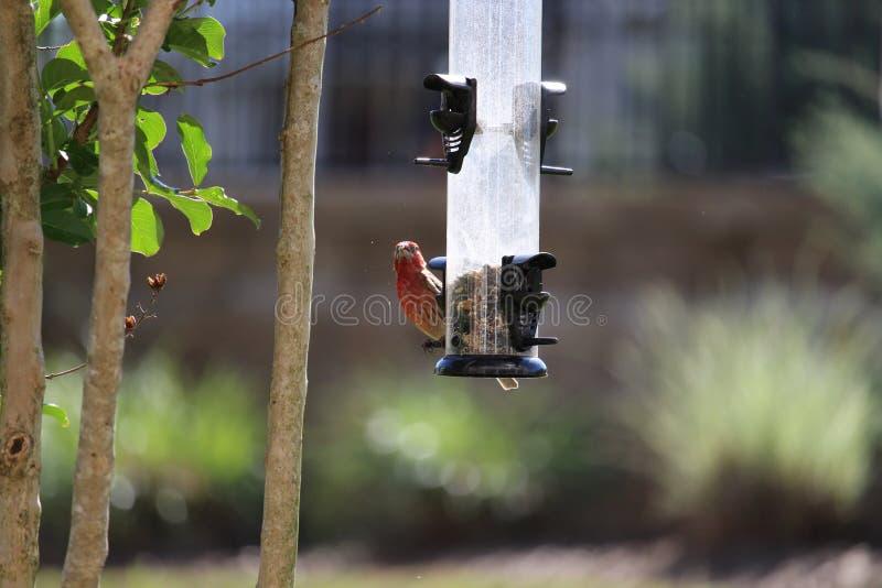 Bird Feeder, Fauna, Bird, Branch stock image