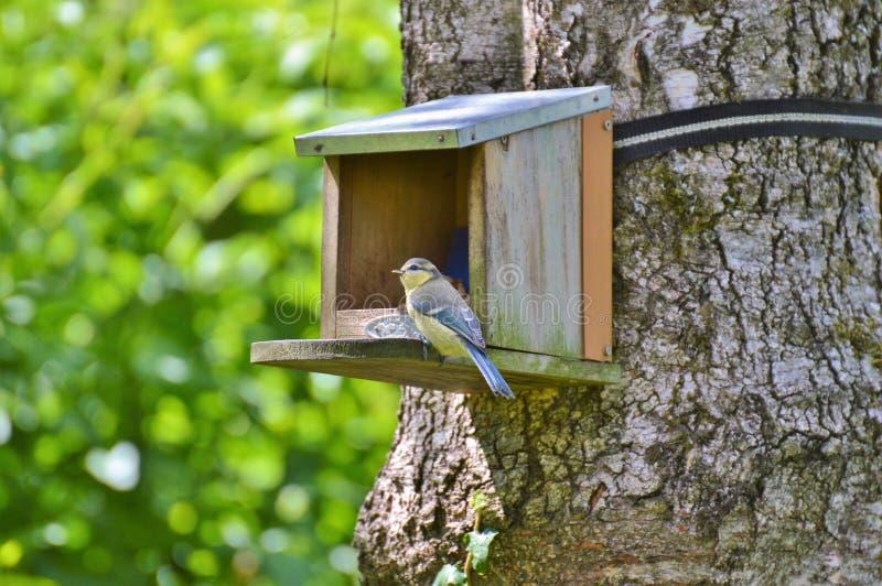 Bird, Bird Feeder, Bird Food, Fauna stock images