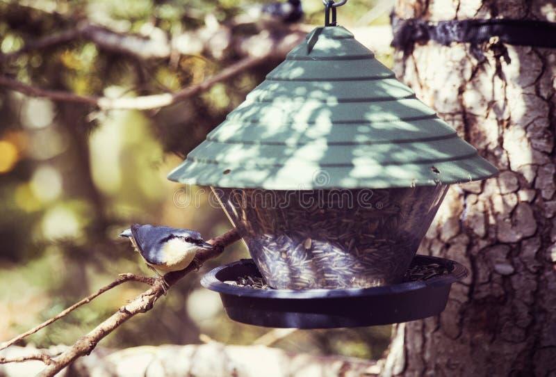 Bird Feeder, Bird Food, Bird, Tree stock images