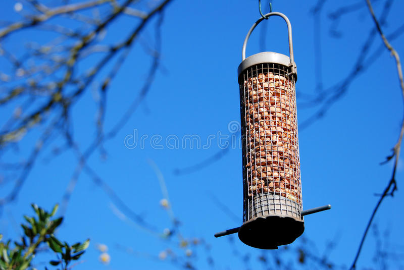 Bird feeder full of peanuts hanging against a blue sky. Bird feeder full of peanuts hanging from a tree branch against a blue sky royalty free stock photo
