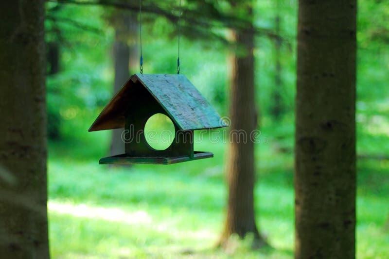 Bird feeder hanging against blurred green summer forest stock photo