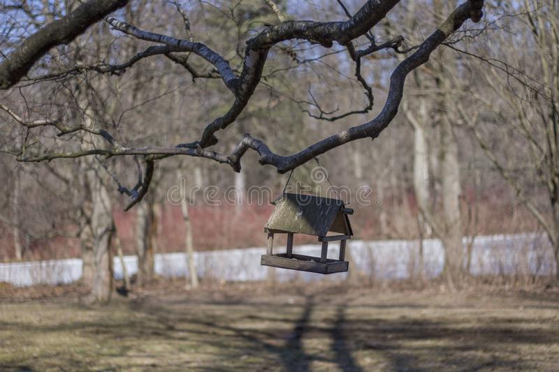Bird feeder hanging on the branches against a blurred background. Of spring forest stock photos