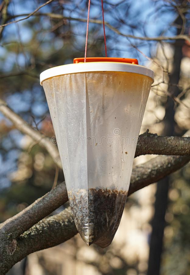 Bird feeder hanging in the tree. In spring stock photo