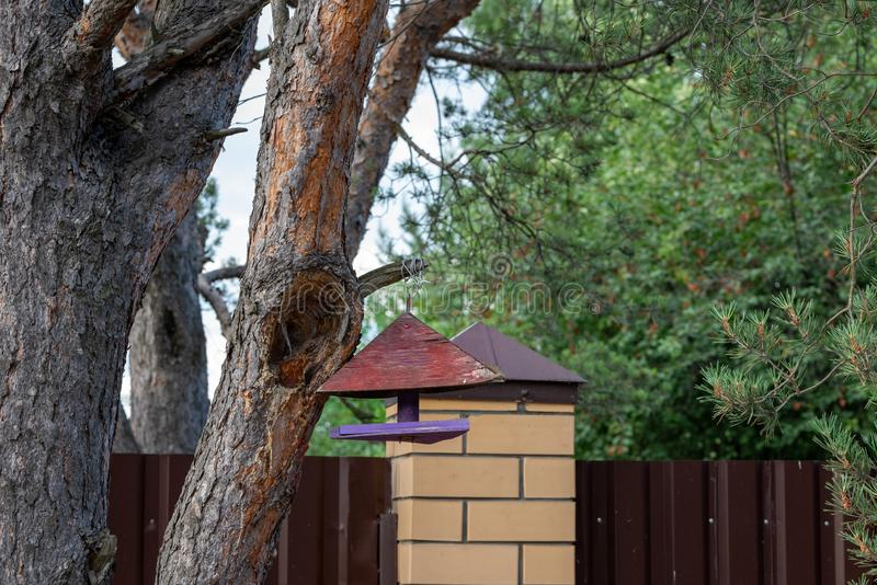 Bird feeder hanging on a tree.  stock photography