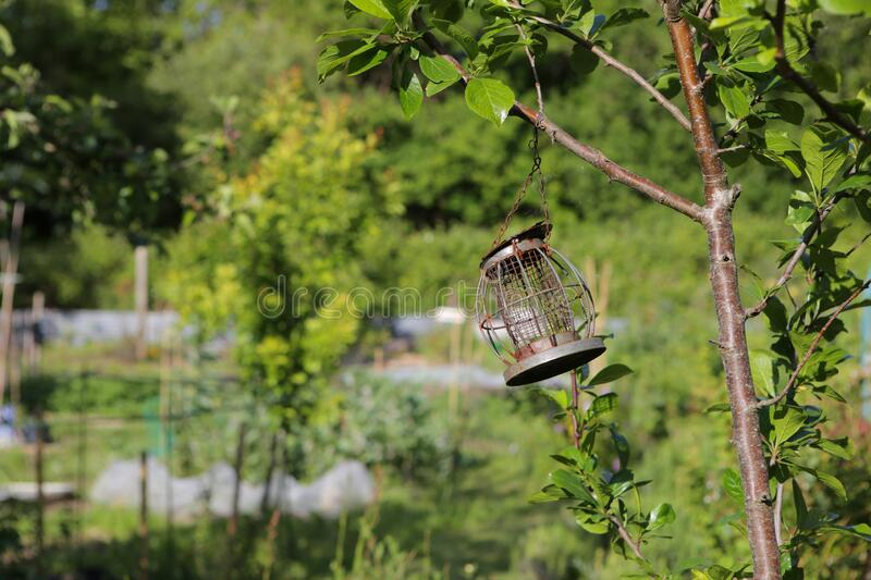Bird feeder hanging from a tree branch stock photography