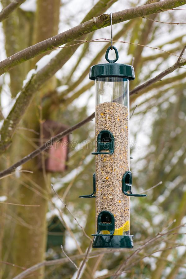 Bird Feeder hanging on a tree. Bird feeder filled with seeds hanging on a treed stock photo