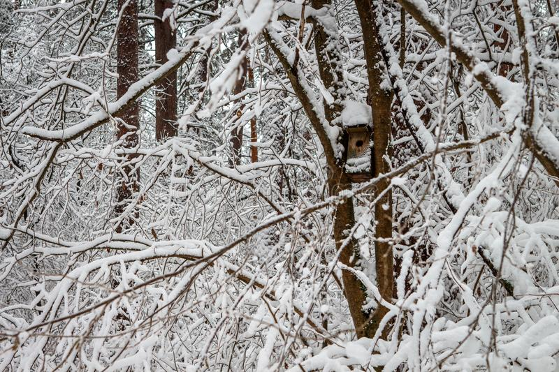 Bird feeder hanging on a tree in a snowy pine forest. The trough with an entrance in the shape of a heart royalty free stock image