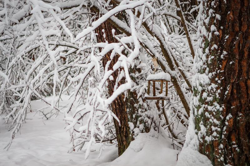 Bird feeder hanging on a tree in a snowy pine forest. The trough with an entrance in the shape of a heart royalty free stock photo