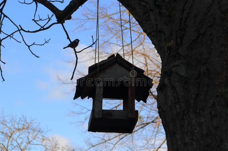 A bird feeder hanging on a tree using strings and a hungry bird great tit Parus major sits on a nearby branch. Silhouette of the feeder and the bird in a blue royalty free stock images