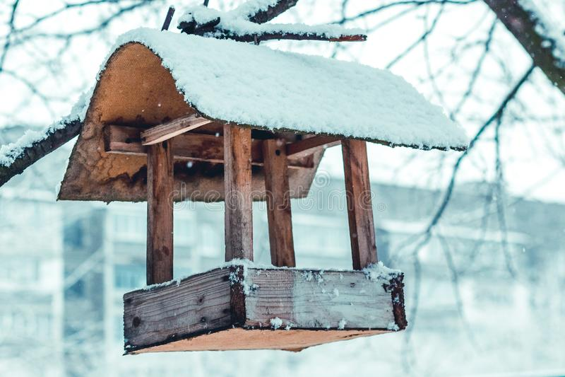 Bird feeder hanging on a tree, winter. _ royalty free stock photos