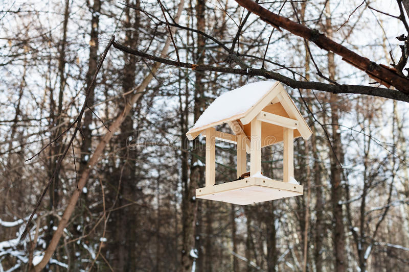 Bird feeder on tree branch in forest in winter. Wooden bird feeder on tree branch in forest in winter royalty free stock image