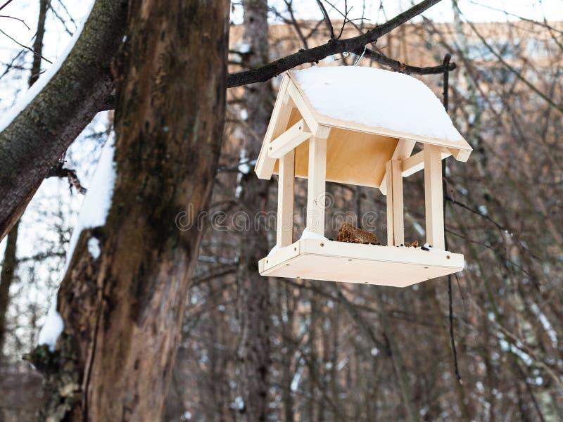Bird feeder on tree branch in urban park in winter. Wooden bird feeder on tree branch in urban park in winter stock photo