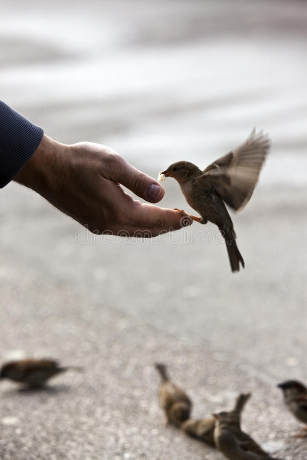 Bird feeding hand stock image