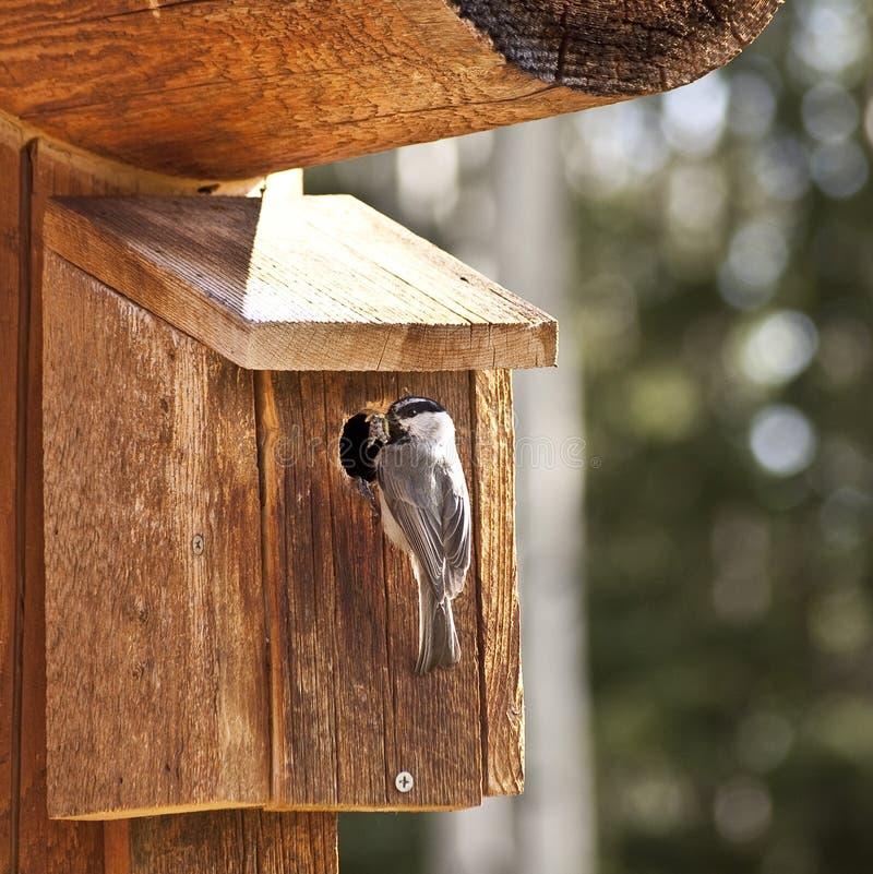 Bird feeding insects royalty free stock photo