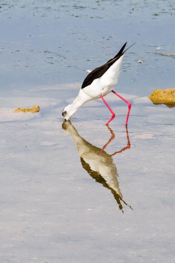 Download Bird feeding by sea stock photo. Image of ocean, wades - 27125928