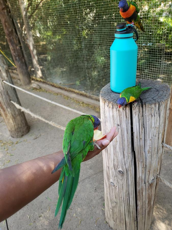 Bird feeding time at the Zoo stock photo